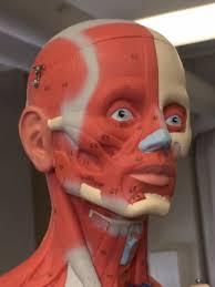 human anatomy at colby