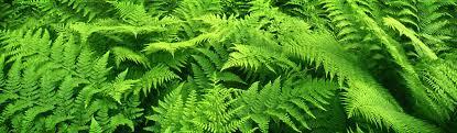 green plants plants