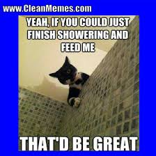 Appropriate Memes For Kids - cat memes clean memes the best the most online