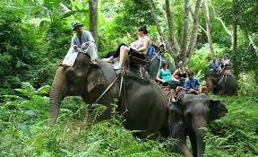 Elephant Trekking in Ao Nang – Enjoy a bumpy ride!