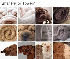 Towel Meme - shar pei or towel memes