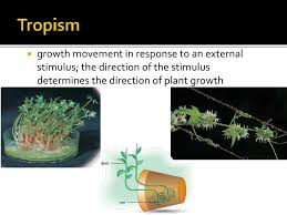 What Is Growth Movement Of A Plant Toward Light Called Plant Adaptations Bd Mod
