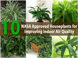 easy house plants indoor best trees ideas on pinterest desk plant