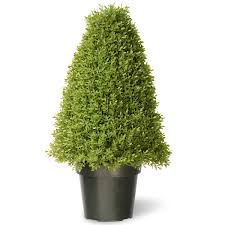 national tree 36 inch boxwood tree in green pot lbx4