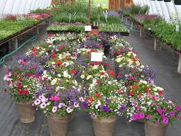 beautiful flower pots shortgrass greenhouse makeovers images of