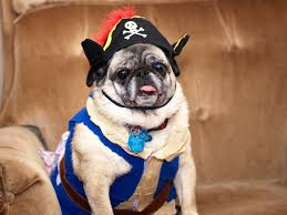 fat kid halloween costume 19 halloween costumes that are actually clever pug pictures