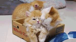 Kitten Bed Celebrate This Caturday With Piglet Kitten Bed Cats Vs Cancer