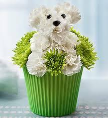 dog flower arrangement 1 800 flowers unveils dog flower arrangement collection