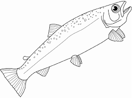 Salmon Fish Coloring Page | realistic salmon fish coloring page
