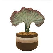 pots for succulents for sale succulents u0026 cactus plants garden plants u0026 flowers the home depot