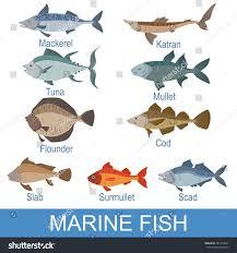 marine fish identification slate names stock vector 501914941