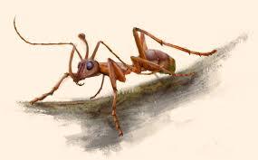 unicorn u0027 ant with oversized jaws found in burmese amber