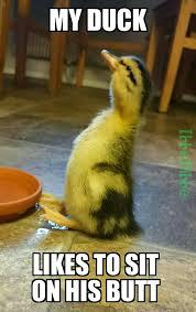 Duck Meme - he is a very cute duck meme by ibbebibbe memedroid