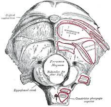 Floor Of The Cranium Ii Osteology 5a The Cranial Bones 1 The Occipital Bone Gray