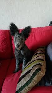 boxer dog fidget spinner 2232 best dog day afternoon images on pinterest funny animals