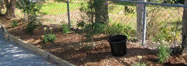 diy mulch for vegetable garden 2014 choosing mulch for vegetable