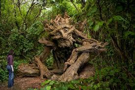 chidinma inspirations 24 really strange looking trees