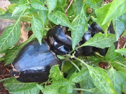gardening liska u0027s blog