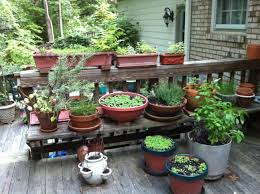 the kitchen garden gardening ideas