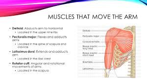 chapter 7 the muscle system ppt video online download