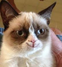 Smiling Cat Meme - grumpy cat is a classically trained actor living in peckham