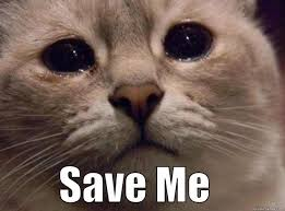 Save Me Meme - tearful kitty quickmeme