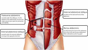 Diagram Of Knee Anatomy The 14 Best Ab Exercises For A Rock Solid Core Yuri Elkaim