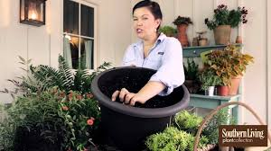 how to plant a container garden for your front porch youtube