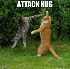 Cat Hug Meme - image tagged in huggers cats funny cute imgflip