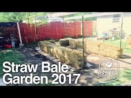 straw bale garden 2017 3rd year part 1 youtube