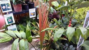 Unusual Tropical Plants - 2nd light forums forums unusual tropical plants for sale at