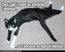 Cat Problems Meme - i can has cheezburger fifth world problems funny internet cats