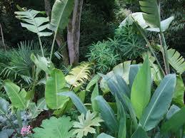 alternative eden exotic garden abbotsbury subtropical gardens