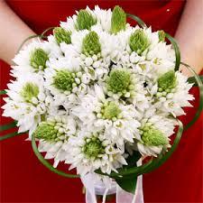 of bethlehem flower of bethlehem flower fancy pansy floral designs servicing