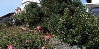 Xeriscape Landscaping Ideas A Guide To Xeriscape Fundamentals Landscaping Network
