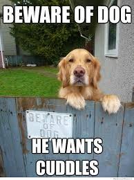 Cute Dog Memes - beware of dog weknowmemes