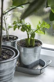 inside herb garden how to grow an indoor herb garden farm and dairy