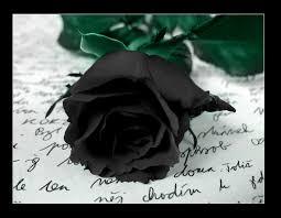Black Rose Flower Black Rose Symbolism Wiki Fandom Powered By Wikia
