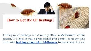 How To Identify Bed Bugs Bedbugs Identification And Removal