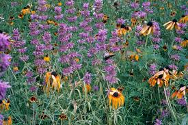 native plant species go native start replacing the invasive species in your yard