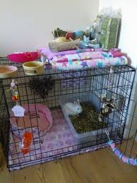 best 25 indoor rabbit ideas on pinterest indoor rabbit house