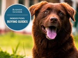 am best key rating guide the best flea prevention and treatment for dogs business insider