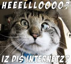 Internet Meme Cat - great cats be funny blog internet cat memes
