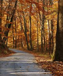 best places to see fall leaves foliage outside nyc trip