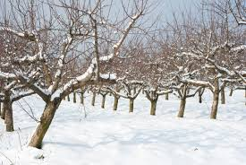 how to prune your fruit trees modern farmer