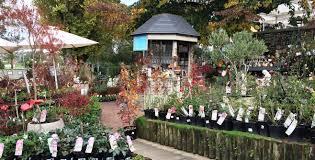 native plant nurseries melbourne garden nursery melbourne cbd garden nursery melbourne cbd fitzroy