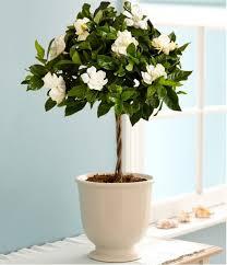 Indoor Flower Plants Best 25 Plants Ideas On Pinterest Plants Indoor House Plants
