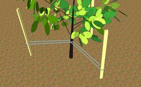 transplanting native plants how to transplant a young tree 9 steps with pictures wikihow