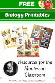 montessori tree printable free montessori biology printables for children montessori nature