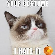Grumpy Cat No Meme - my favorite grumpy cat face halloween schtuffs pinterest